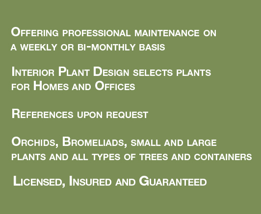 Los Angeles Interior Plant Design - Home and Office Plant Care